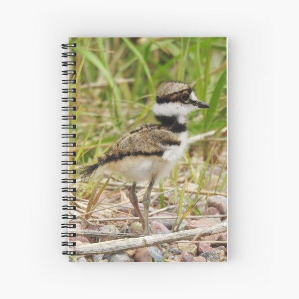 Baby Killdeer Spiral Notebook