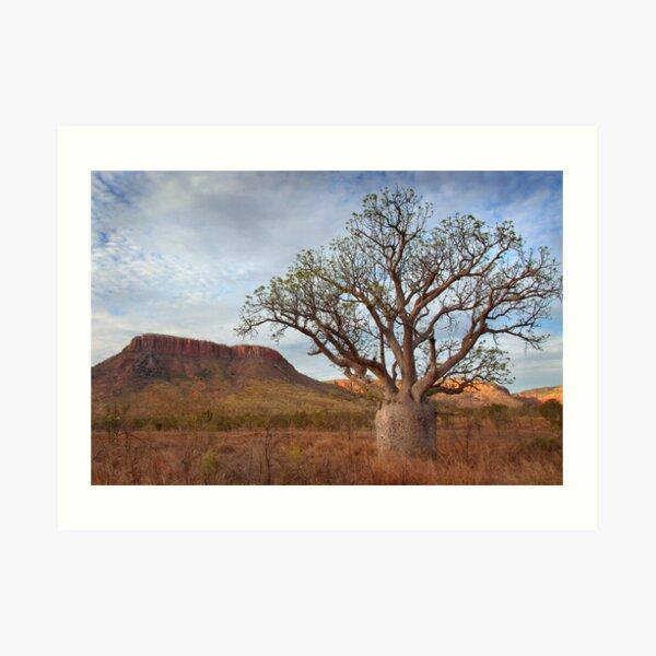 Boab Tree, Gibb River Road, Western Australia, 10 Oct 2010 Art Print