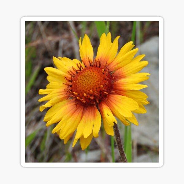 Blanket Flower Sticker