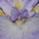 Between White And Violet by MissyD