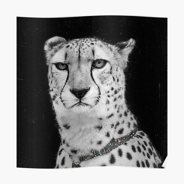 Vintage Cheetah Diamond Collar Poster