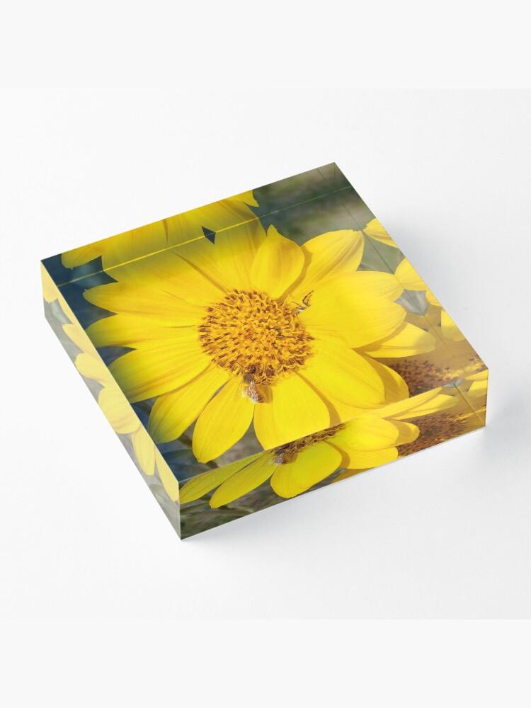 Alternate view of Peek-a-boo spider Acrylic Block