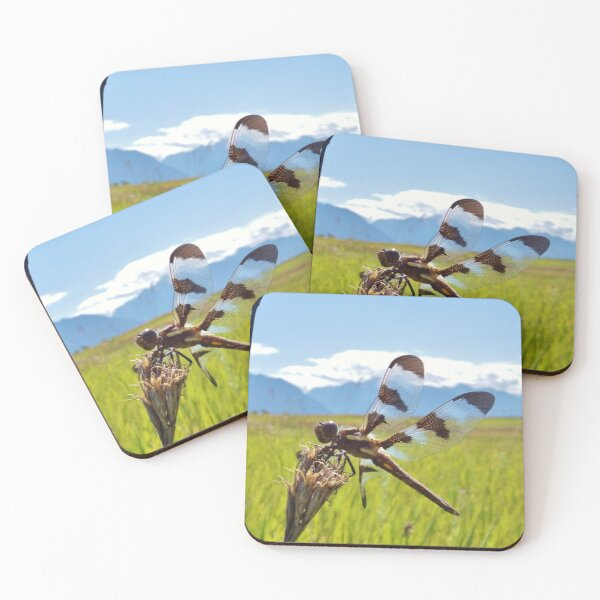 Black & White Dragonfly Coasters (Set of 4)