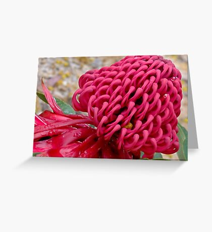 NSW Warratah - Growing native in New South Wales Greeting Card