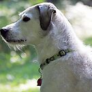 Emma - On Squirrel Watch by T.J. Martin