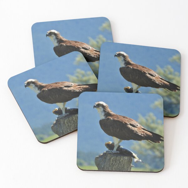 Nice Catch Coasters (Set of 4)