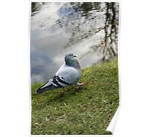 Bird, Pigeon motion blur Poster