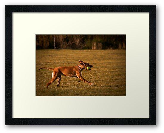 Fetch by Reese Ferrier