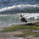 Seagull Watching the Surf by Heather Friedman