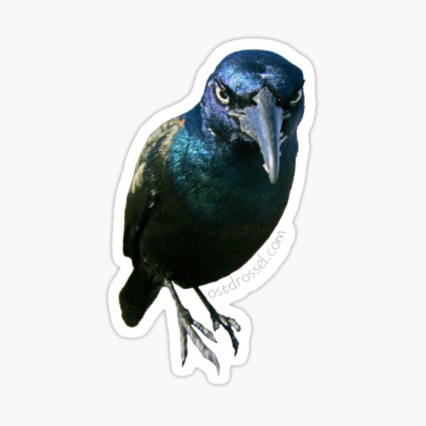 Graf Grackula Sticker