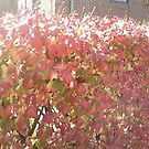 fiery fall by catnip addict manor