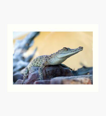 Croc profile - crocodile at Croccosaurus center Darwin Art Print