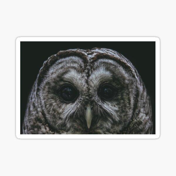 A Barred Owl Sticker