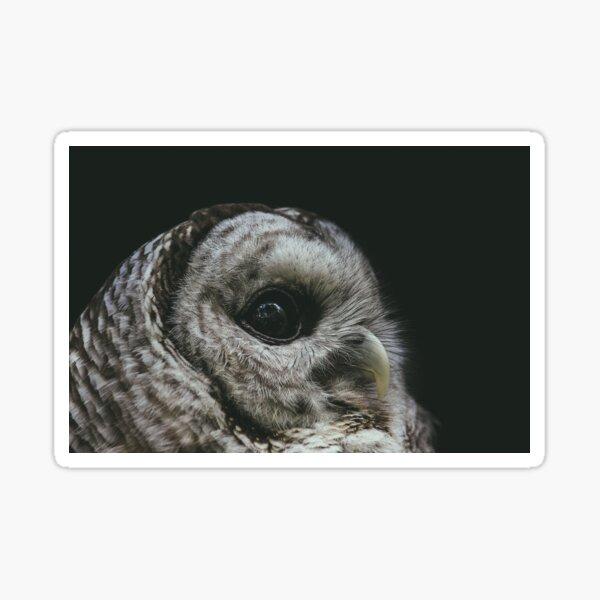 A Barred Owl's Gaze Sticker
