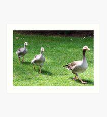 Ducks playing Follow the Leader Art Print