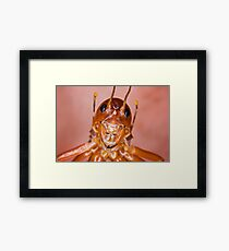 The Parktown Prawn Framed Print