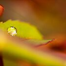 Colours of Autumn by iltby