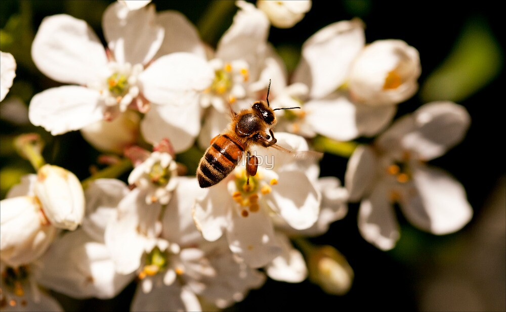 Hover Bee by iltby