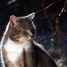 Stern cat by turniptowers