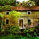 The House  by Debra Fedchin