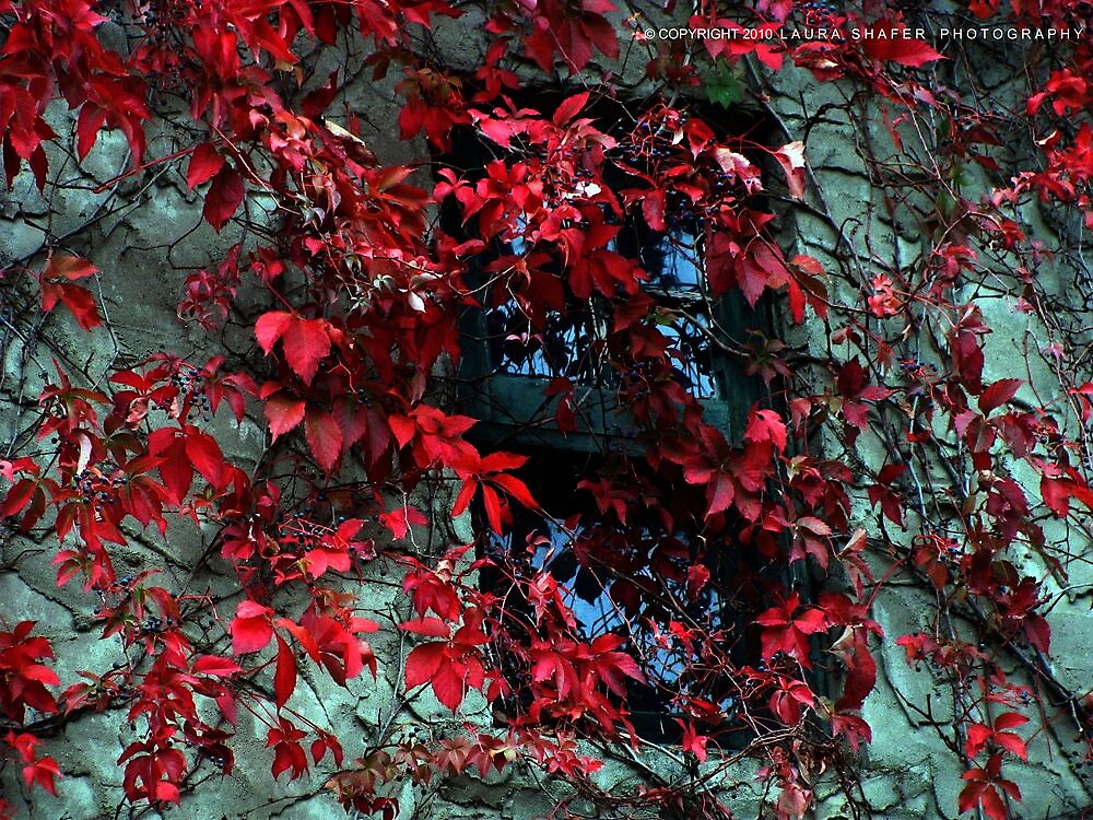 AUTUMN VINES by Laura E  Shafer
