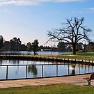 Peaceful Walking, Lake Weeroona. by Lozzar Landscape