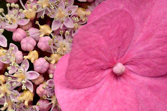 Schön in pink von Kasia Nowak