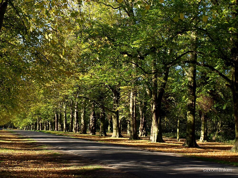 Lime Tree Avenue by saxonfenken