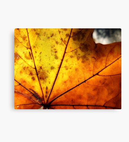 Letter Dropt From God? Canvas Print