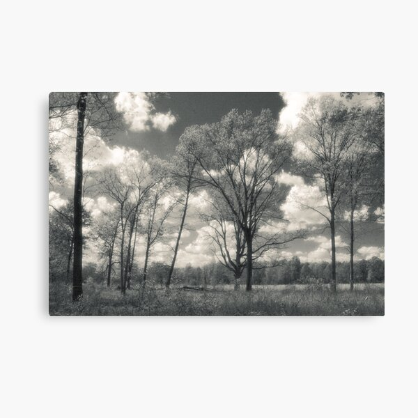 Prairie In May Canvas Print