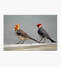 Mr. and Mrs. Bird Photographic Print
