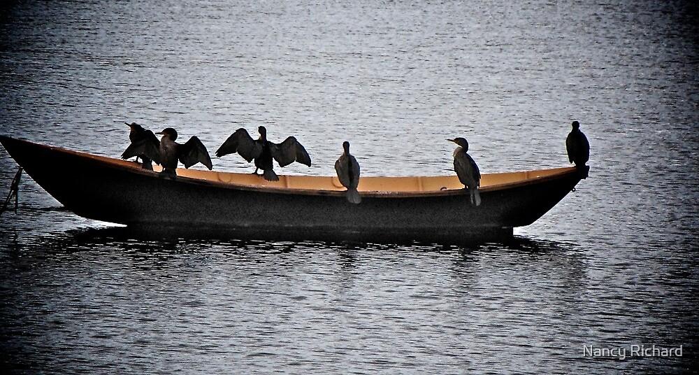 Cormorants Afloat! by Nancy Richard