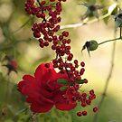 Natures Bounty by Pamela Jayne Smith