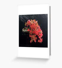 Parthenocissus quinquefolia/Virginia Creeper Bonsai Greeting Card