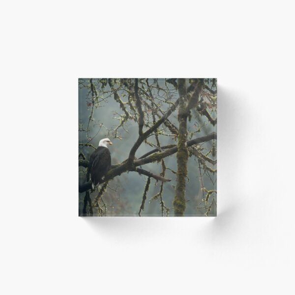 Eagle in the rainforest Acrylic Block