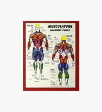 MUSCULATURE: Carte d'anatomie de musculation Impression rigide