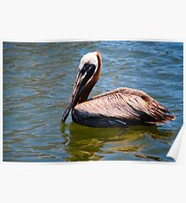 Pelican on the Water Poster