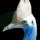 Cassowary, Queensland, Australia by Adrian Paul