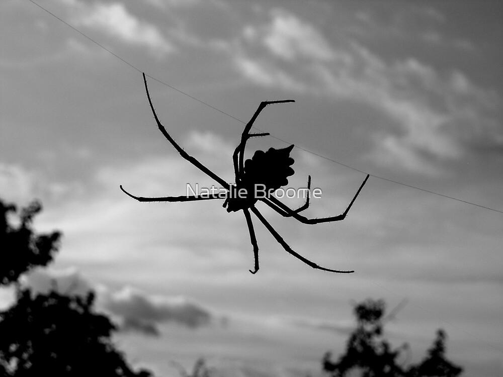 Kruger Spider by Natalie Broome
