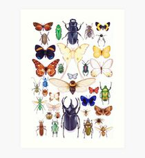 Insect collection Art Print