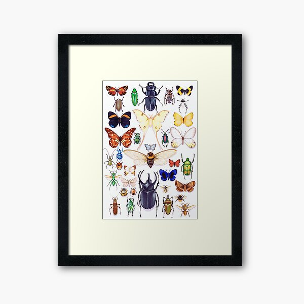 Insect collection Framed Art Print