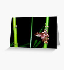 Vietnamese Frog Greeting Card