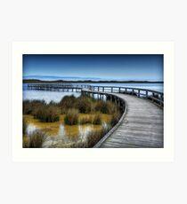 Lake Clifton Boardwalk. Art Print