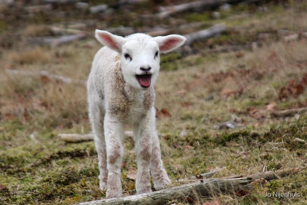 It is Spring - Welcome Little Lamb by Jo Nijenhuis