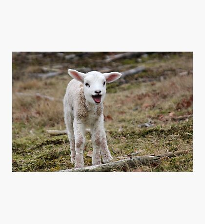 It is Spring - Welcome Little Lamb Photographic Print