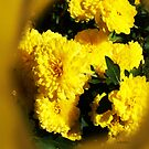 Yellow Mums by Terri Chandler