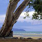 Shoal Point - Mackay by Jordan Miscamble