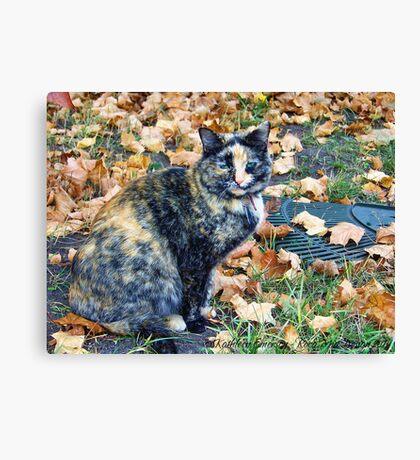 Autumn Cat Canvas Print