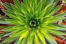 Green Star by Walter Quirtmair