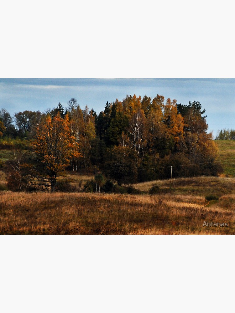 Coppice in autumn (Autumn 2010) by Antanas